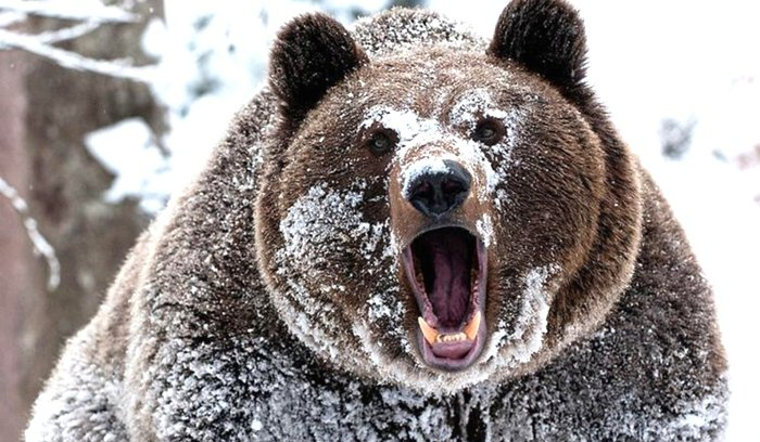 Россия угрожает международному порядку, - постпред США при ООН Пауэр - Цензор.НЕТ 9263