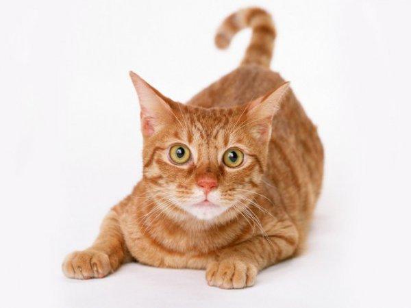 Кировчанина все-таки привлекут к ответственности за убийство кота