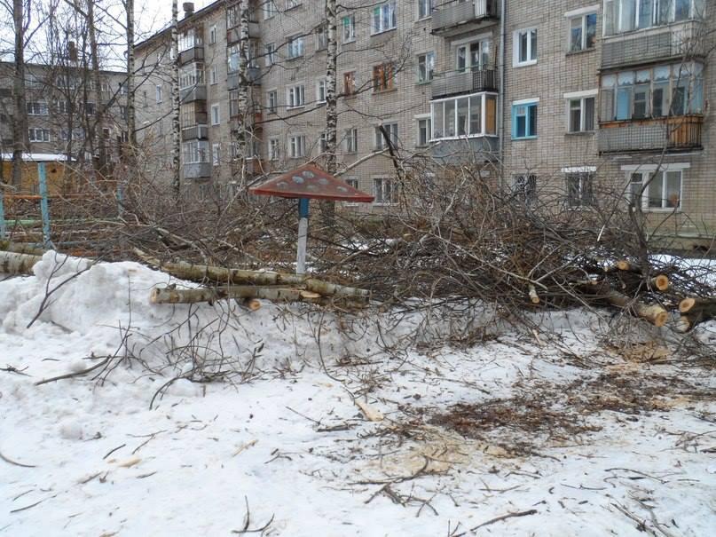 Кировчане возмущены вырубкой деревьев во дворе дома