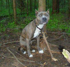 страшные находки в лесу фото