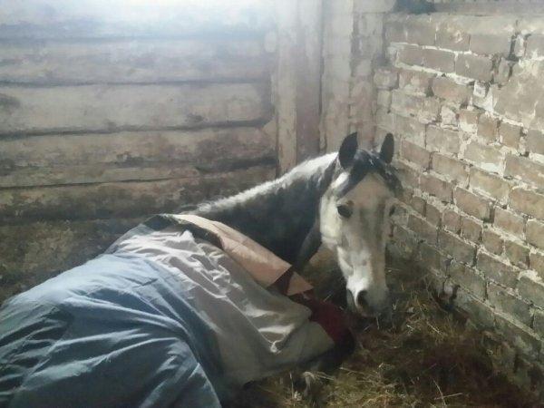 Прокуратура второй раз заставила полицию заняться истощенными лошадьми