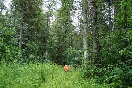 какой лес лучше кировский или марийский