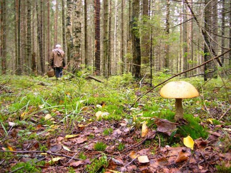 За прошлые сутки вкировских лесах заблудилось шесть человек