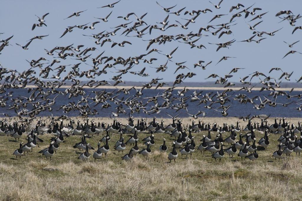 Ученые выяснили почему птицы