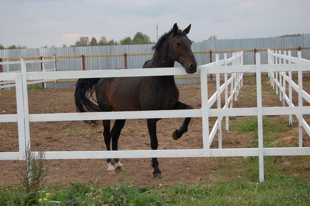 ВКирове жеребец лягнул полицу воспитанницу конной школы