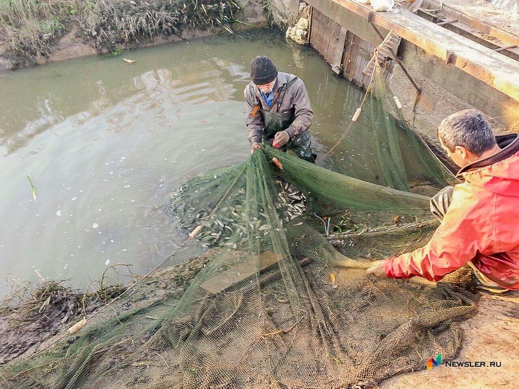 рыболовное хозяйство киров
