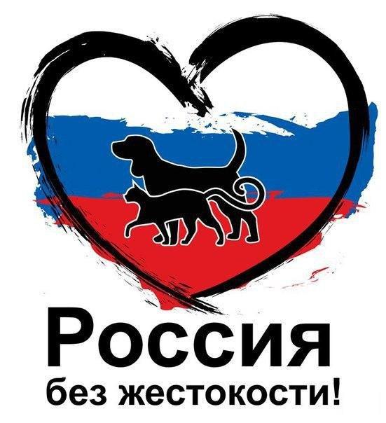 ВСмоленске устроят пикет против живодёров