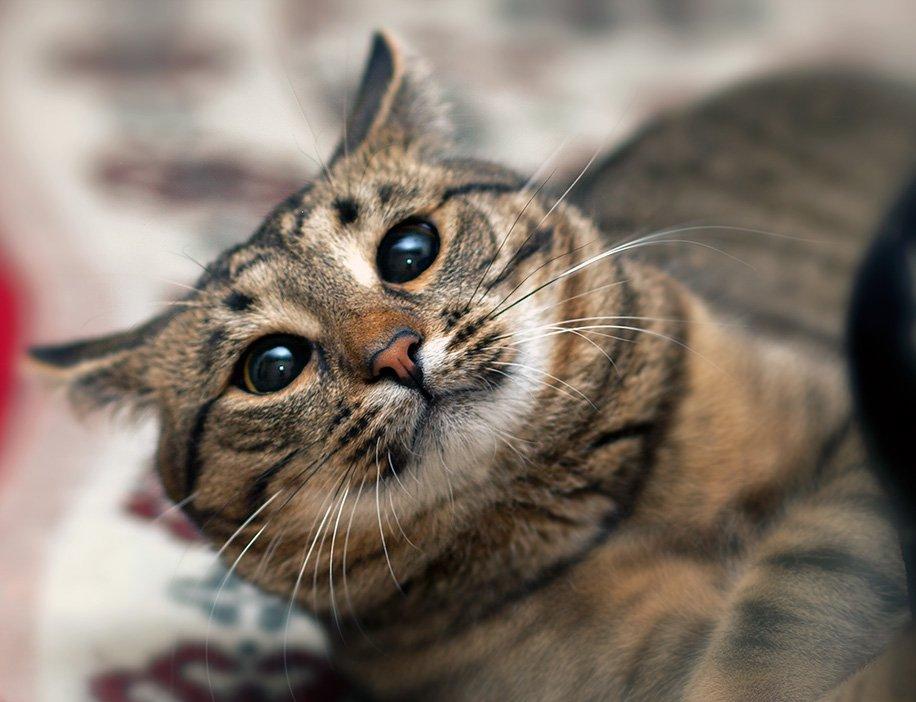ВКирове напост народного главы города посоветовали выбрать кота
