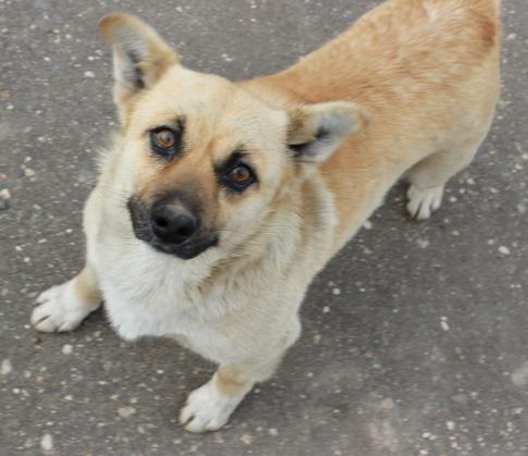 ВНововятске рыжеватый пес покусал детей и пожилых людей