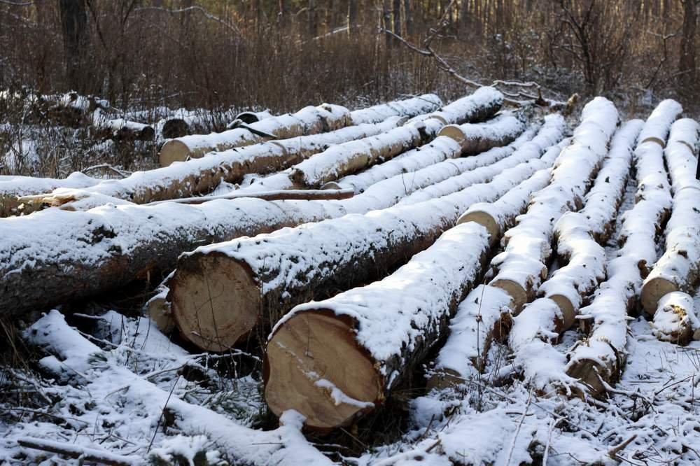 «Чёрные лесорубы» в прошлом 2016г. нарубили на139 млн руб.
