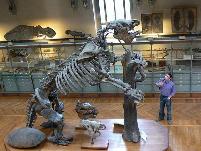 Ученые доказали вину туземцев ввымирании огромных животных Австралии