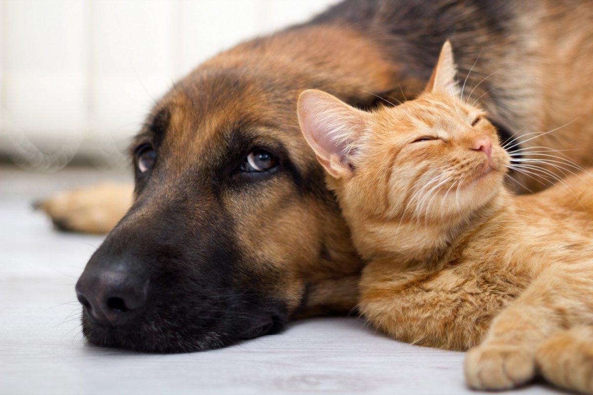 Кошки неглупее собак— Ученые