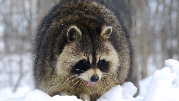 Около 8 тыс. раз животные кусали граждан Новосибирской области