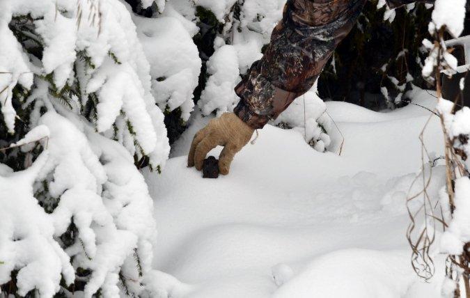 Наокраинах Кирова вскоре будет разложена вакцина против бешенства для животных