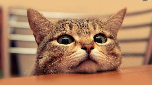 ВКирове возникла услуга «кот начас»