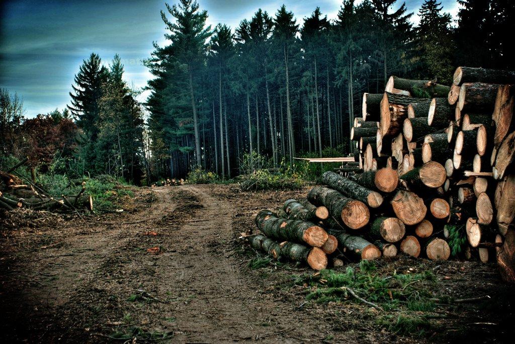 1 млн руб. заплатит депутат районной Думы зарубку леса вНагорске