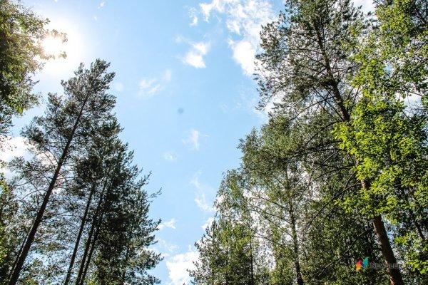 Двое кировчан незаконно вырубили лес на 4 млн рублей