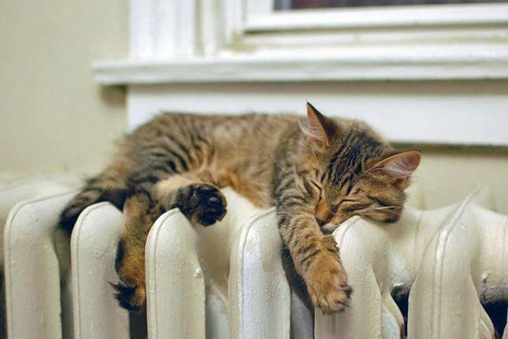 Сегодня в дома кировчан придет тепло