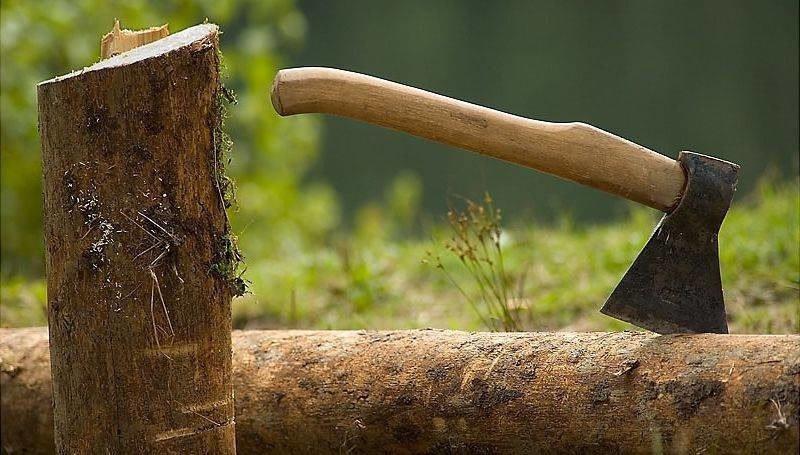 Гражданин Лузы нелегально вырубил лес на1 млн руб.