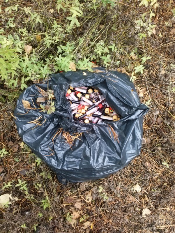 В Башарово кировчане, собирая грибы, наткнулись на свалку с кровью