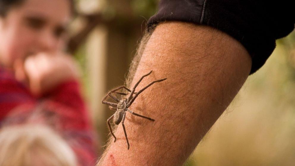 Ученые обнаружили, что люди опасаются пауков измей срождения