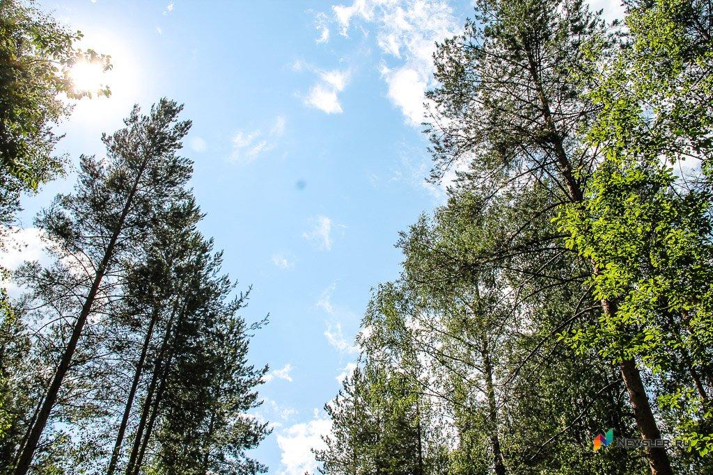 ВСлободском районе дерево упало нарабочего