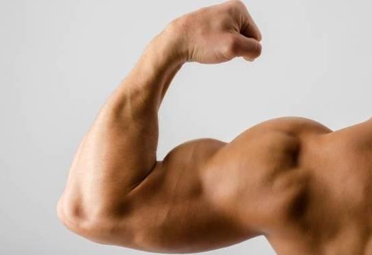 Впервый раз изстоловых клеток вырастили человеческую мышцу