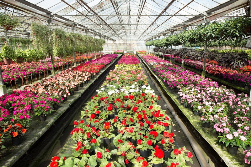 Оптом цветы на заказ екатеринбург уралмаш